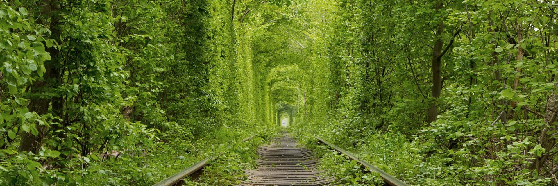 Konsultation ledarskap sälj business coach Hanna Plymouth illustrerat av järnvägsspår som försvinner in i grön tunnel av träd