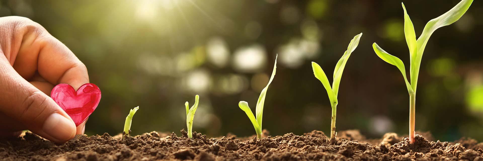 Process Passion för Utveckling som skapar lönsamhet och tillväxt illustrerad av ett hjärta som planteras och små plantor som gror