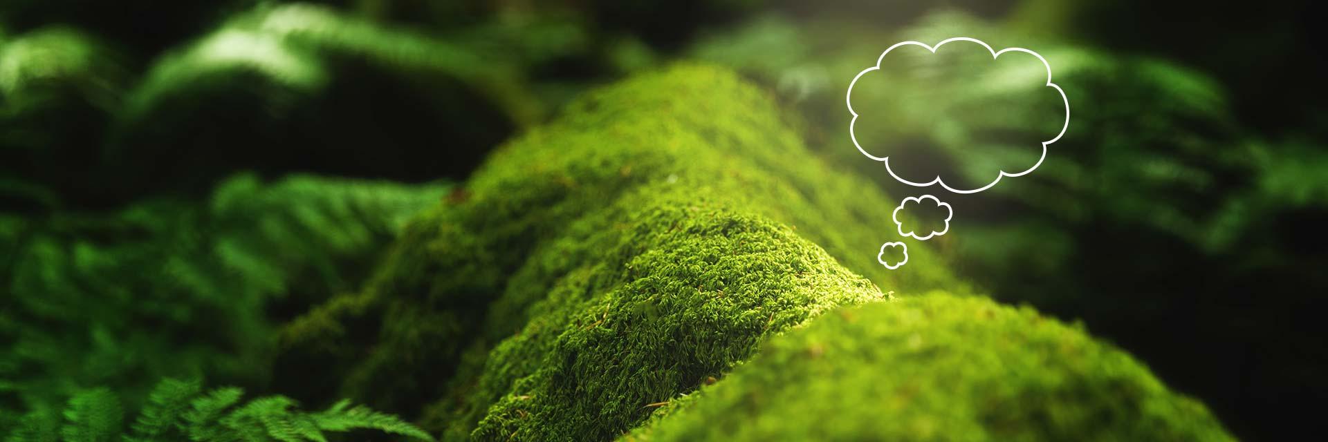 Mindset och Growth Mindset illustrerat av mossa med tankebubbla